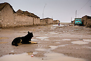 The flooded muddy streets and a lonely dog in the village of Colchani in Potosi, Bolivia after a summer rain storm.
