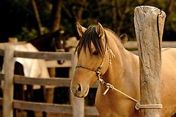 Cavalo na mangueira. FOTO: Jefferson Bernardes/Preview.com