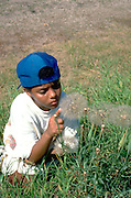 African exchange student age 12 from Mali Africa studying a thistle.  Battle Lake  Minnesota USA