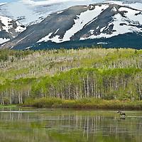 moose crossing pond, froggy flats, blackfeet reservation