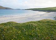 Machair grassland and sandy beach at Bagh a Deas, South Bay, Vatersay island,Barra, Outer Hebrides, Scotland, UK