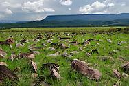 """AUYANTEPUY, VENEZUELA. Vista del valle Uruyen, El Auyantepuy es el mayor de los tepuis del Parque Nacional Canaima. En sus 700 kms2 alberga el salto angel o conocido por lengua indígena Pemon como """"Kerepacupai Vena; es la caída de agua más grande del mundo con sus 979 metros de altura. (Ramon lepage /Orinoquiaphoto/LatinContent/Getty Images)"""