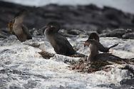 Galapagos Islands, 2009