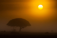 A misty blanket covers the De Hoop Nature Reserve at dawn, Western Cape, South Africa