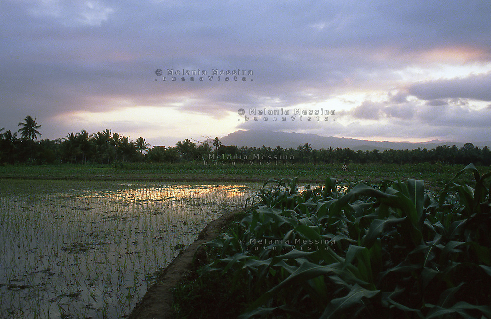 Paddy fields in Java, Indonesia.<br />