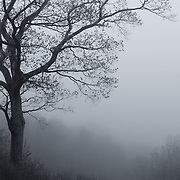 &quot;Afternoon Fog&quot; mono<br /> <br /> Lovely afternoon fog in the Blue Ridge Mountains of Virginia!!<br /> <br /> All About Fog by Rachel Cohen