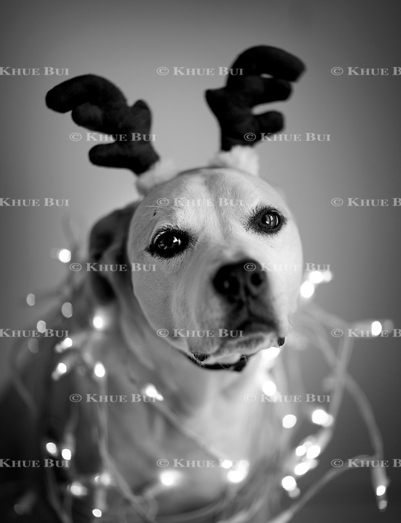 Izzie poses for holiday pictures November 26, 2017, in Richmond, VA.<br /> <br /> Photo by Khue Bui