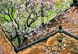 China, Wutai Shan, 2008. Spring blesses a stone and mortar house on the outskirts of Taihuai town, the center of the valley and of the Wutai Shan community.