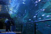 Palacio del Mar, Aquarium in San Sebastian, Spain