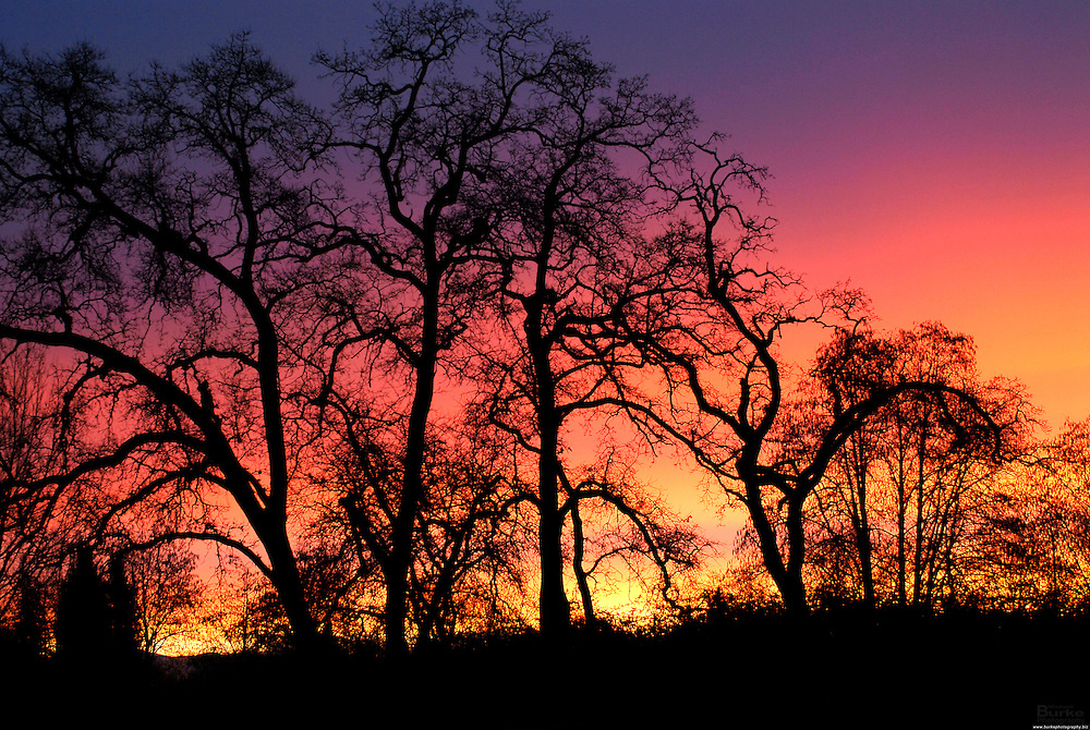 Northern California is a beautiful part of the State.  Sunrise and sunset enchant the visitors and people who call this area home. Oak Trees are native to the area and home to many birds.