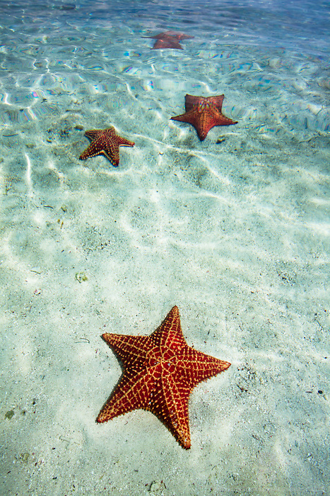 Paradise and seclusion found amongst the tropical San Blas Islands on the Caribbean side of Panama while starfish scattered on white sand under crystal clear water.