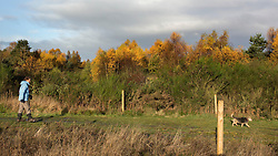© Licensed to London News Pictures. 14/11/2013.  A dog walker enjoys the last few days of Autumn this morning in Cannock Chase, Staffordshire.   Photo credit: Alison Baskerville/LNP
