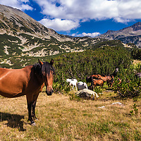 Horse and it's herd in te mountain