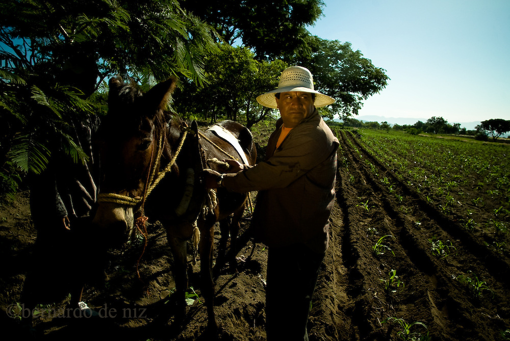 Traditional corn farming  in the central Puebla state in Mexico. Photographer: Bernardo De Niz.