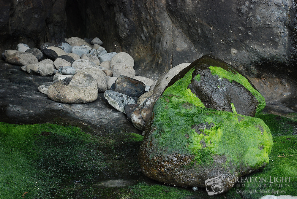 At the base of the cliffs, below the Haceta Head Lighthouse is a shallow cave with rocks to the side, some with bright green algae growing on them.