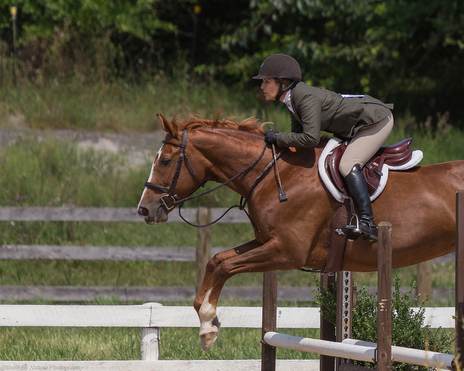 Image from the August 26, 2017 Elmington Farm Hunter Horse Show held at Elmington Farm in Berryville, VA
