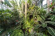 Gewächshaus, Botanischer Garten, Jena, Thüringen, Deutschland   green house, botanical gardens, Jena, Thuringia, Germany