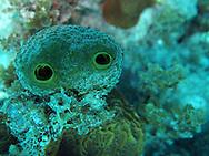 my little sponge head friend