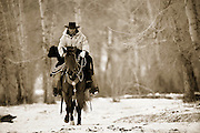 Cowboy with Stray Calf, Idaho