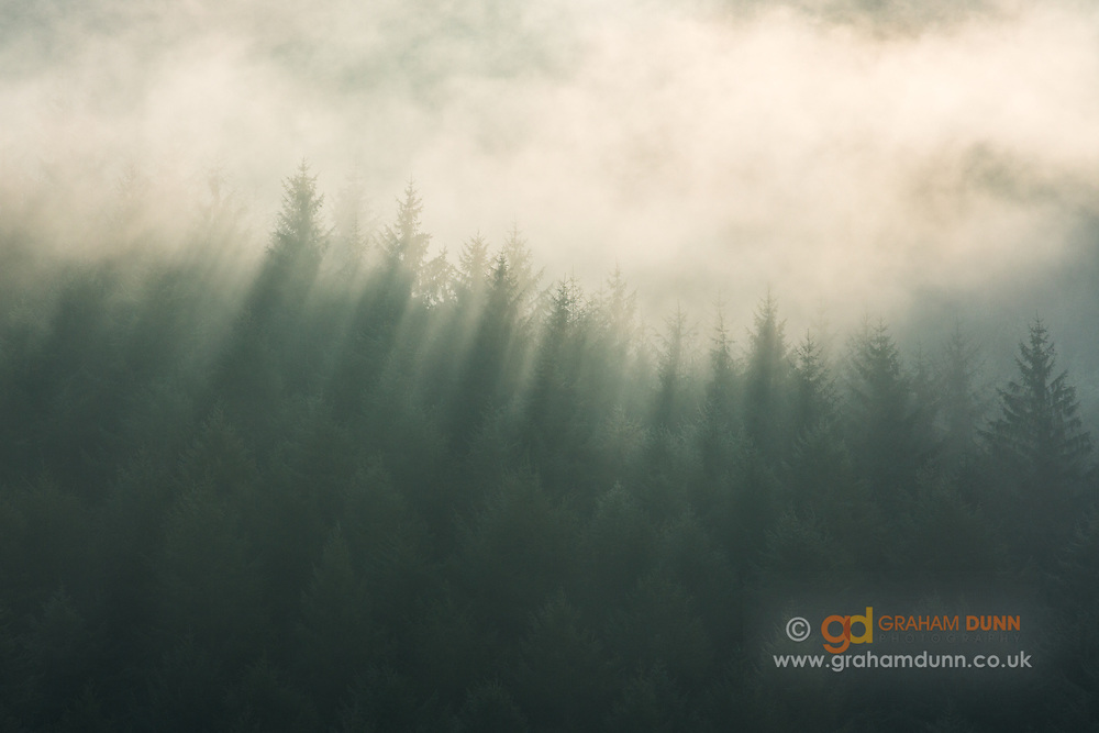 Morning sunlight creates lines of shadow and light as it passes through mist and pine trees above Ladybower Reservoir in the Peak District. Derbyshire, England, UK.