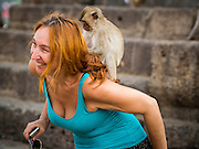 30 NOVEMBER 2014 - LOPBURI, LOPBURI, THAILAND: A juvenile long tailed macaque monkey plays with a tourist at Phra Prang Sam Yot in Lopburi. Lopburi is the capital of Lopburi province and is about 180 kilometers from Bangkok. Lopburi is home to thousands of Long Tailed Macaque monkeys. A regular sized adult is 38 to 55cm long and its tail is typically 40 to 65cm. Male macaques weigh around 5 to 9 kilos, females weigh approximately 3 to 6 kg. The Monkey Buffet was started in the 1980s by a local business man who owned a hotel and wanted to attract visitors to the provincial town. The annual event draws thousands of tourists to the town.    PHOTO BY JACK KURTZ