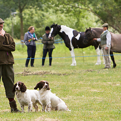Kirkbourne Spaniels Display