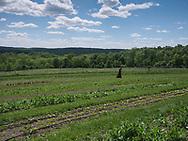 Harmony Farm, Goshen, NY  - monk