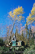 Feller Buncher..Tembec Forest Stewardship Council.certified logging operations..Kapuskasing/Timmins, Northern Ontario.October, 2005...Copyright Garth Lenz. Contact: lenz@islandnet.com www.garthlenz.com
