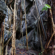 Tree roots taking hold in a rocky pass at the Pha Tub Cave Forest Park, nan, Thailand.