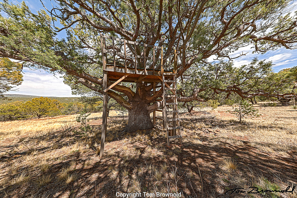 tree house in an Alligator juniper tree. Vacation rental home