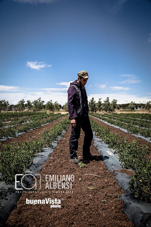 Emiliano Albensi<br /> 30/05/2013 Roma<br /> Ritorno alla terra<br /> Nella foto: Giacomo Lepri, 28 anni, mentre lavora nei campi della Cooperativa Co.br.ag.or