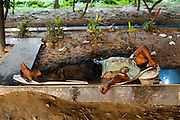 18th September 2014,New Delhi. A man sleeps under a road bridge with a puppy in New Delhi, India on the 18th September 2014<br /> <br /> Sleeping in the outdoors is common in Asia due to a warmer climate and the fact that personal privacy for sleep is not so culturally ingrained as it is in the West. New Delhi (where most of these images were taken) is a harsh city both in climate and environment and for those working long hours, often in hard manual labour, sleep and rest is something fallen into when exhaustion overwhelms, no matter the place or circumstance. Then there are the homeless, in Delhi figures for them from Government and NGO sources vary wildly from 25,000 to more than 10 times that. Others public sleepers may simply be travellers having a siesta along the way.<br />  <br /> <br /> PHOTOGRAPH BY AND COPYRIGHT OF SIMON DE TREY-WHITE, photographer in Delhi<br /> <br /> + 91 98103 99809<br /> email: simon@simondetreywhite.com