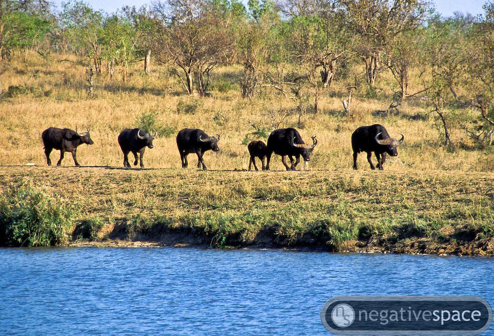 Battle at Kruger No. 1