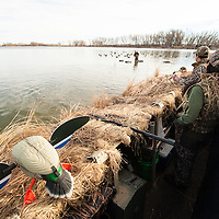 duck hunters in blind with robotic duck