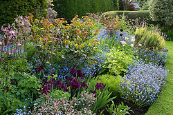 Spring border at Eastgrove Cottage with forget-me-nots, Iris 'Cherry Gardens', Salvia officinalis 'Tricolor' and aquilegias