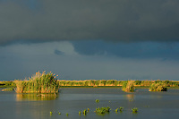 Storm clouds over the reed beds, Phragmites communis, Danube delta rewilding area, Romania
