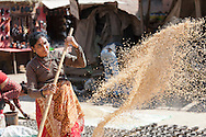 A Nepali woman winnowing rice. Rice is the major crop in the nation where 66% of the Nepali population work in agriculture and it provides approximately 33% of GDP. Nepal remains one of the poorest countries in Asia with a per capita GDP of $562.