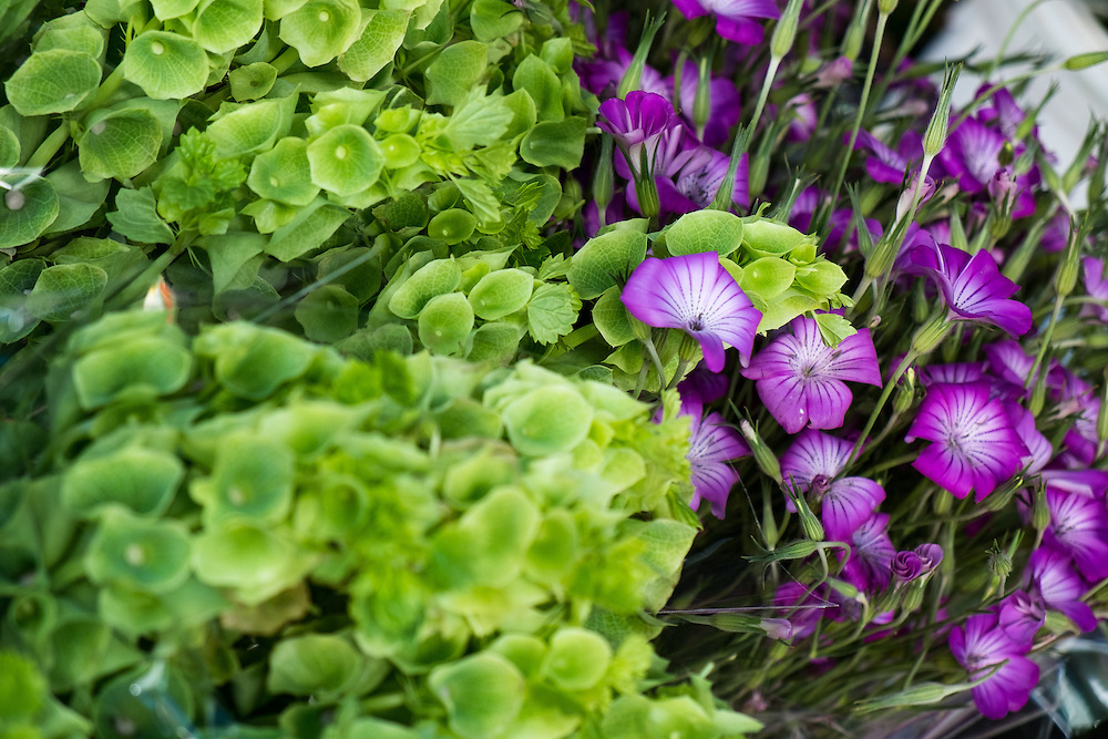 Purple Flowers at the Farmers Market | June 30, 2013