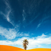 Palm trees at the edge of Erg Chebbi sand dunes.