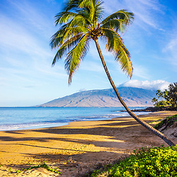 Maui curved bent palm tree at Kamaole Beach Park with Maalaea Bay in Wailiea Kihei Hawaii in the Hawaiian Islands. Copyright ⓒ 2019 Paul Velgos with All Rights Reserved.