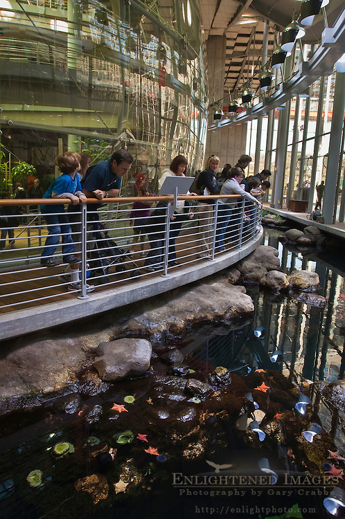 Visitors looking at tidepool exhibit at California Academy of Sciences, Golden Gate Park, San Francisco, California