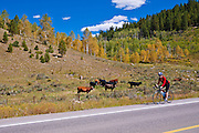 Cyclist on the San Juan Skyway (Highway 62), Uncompahgre National Forest, Colorado