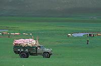 Mongolie, Province de l'Ovorkhangai, Campement nomade, Vie quotidienne chez les nomades, Transport de la laine de cachemire // Mongolia, Ovorkhangai province, collect and transportation of the cachemire whool