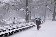 A man walking through Central Park during a <br /> snowstorm in New York City  U.S.A. Winter in New York