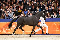 554 - Geronimo D'Hertog<br /> KWPN Stallion Selection - 's Hertogenbosch 2014<br /> © Dirk Caremans