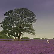 I took this shot of a girl running through lavender fields on a beautiful farm only a short distance from Central London.