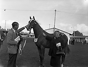 19/09/1960<br /> 09/19/1960<br /> 19 September 1960<br /> Goffs September Bloodstock Sales at Ballsbridge, Dublin. The Ballsbridge September Yearling Sales opened in Dublin and attracted many international racing personalities. Picture shows Mrs Coates, Ayr, Scotland patting a chestnut yearling colt by &quot;King's Bench&quot; out of &quot;Hunter's Quay&quot;, which she bought for 4,000 Guineas at the sales. A.B. Brabazun is on the left.