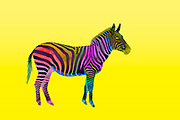 Digitally enhanced image of a multi colored painted plains zebra on yellow background