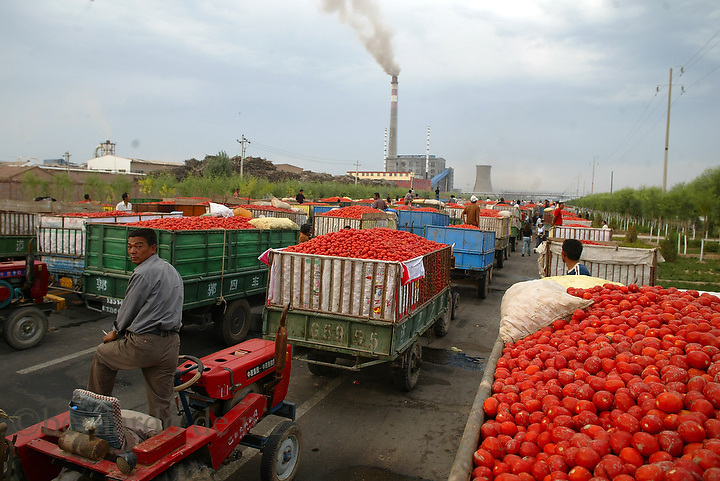 Hundreds of Chinese tomato farmers, wait outside of the tomato factory to buy there production in Hanghou town, in to the Inner Mongolia Autonomous Region, China. 23-Aug-2006. Photo: Bernardo De Niz