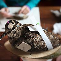 Nederland, Amsterdam , 7 oktober 2010..Mevrouw Seekes uit de Boomstraat is preparateur van vogels. .Op de voorgrond een geprepareerde opgezette vogel..A taxidermist preparing a bird. A snipe half way to be stuffed.